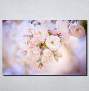 Slike na platnu Najlepši cvet Nina113_P