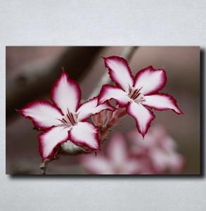 Slike na platnu Neobican cvet Nina175_P