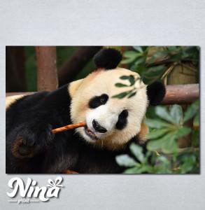 Slike na platnu Panda Nina268_P