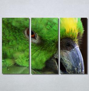 Slike na platnu Papagaj zeleni Nina30349_3