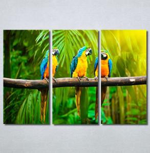 Slike na platnu Papagaji Are Nina30249_3