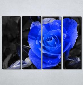 Slike na platnu Plava ruza Nina127_4