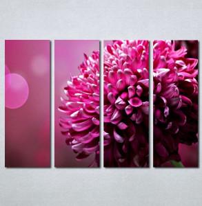Slike na platnu Roze cvet Nina131_4
