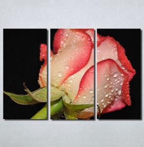 Slike na platnu Roze ruža Nina30130_3