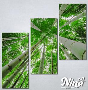 Slike na platnu Suma bambusa Nina329_3