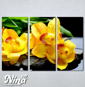 Slike na platnu Žuta orhideja Nina252_3