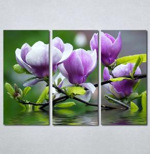 Slika na platnu Ljubičasta magnolija Nina3097_3