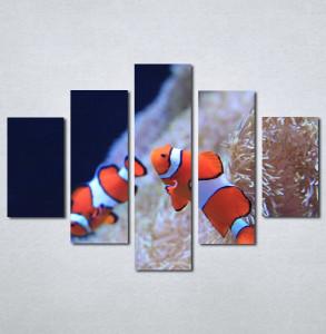 Slika na platnu Riba nemo Nina3081_5