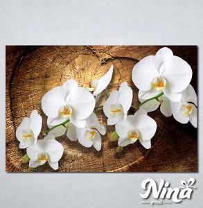 Slike na platnu Bele orhideje Nina323_P