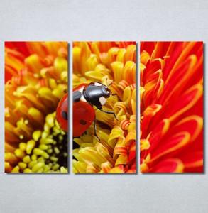 Slike na platnu Bubamara Nina30284_3