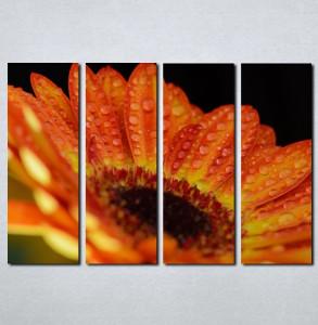 Slike na platnu Gerber Nina037_4