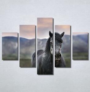 Slike na platnu Konj na poljani Nina30205_5