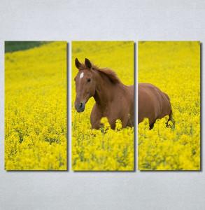 Slike na platnu Konj na žutoj poljani Nina30264_3