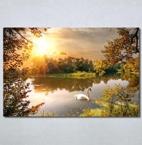 Slike na platnu Labud na jezeru Nina30286_P