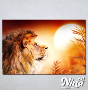 Slike na platnu Lav kralj životinja Nina308_P