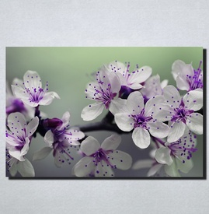 Slike na platnu Ljubicasto cvece Nina166_P