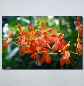 Slike na platnu Narandžasti cvet Nina30233_P