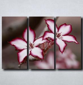 Slike na platnu Neobican cvet Nina175_3