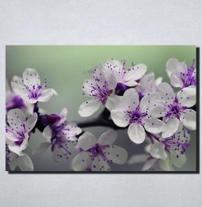 Slike na platnu Nezno ljubicasti cvet Nina166_P