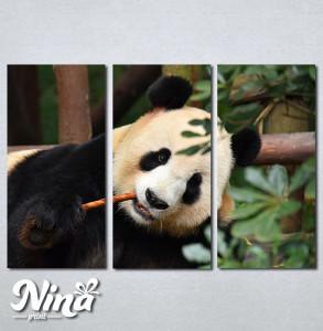 Slike na platnu Panda Nina268_3