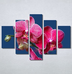 Slike na platnu Pink Orhideja Nina30290_5