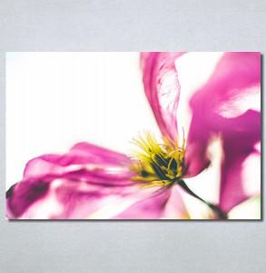 Slike na platnu Ružičaste latice Nina30276_P