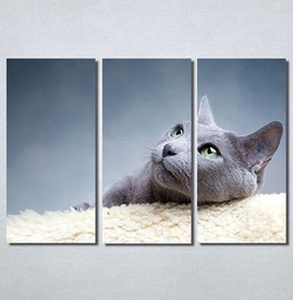 Slike na platnu Siva mačka Nina30148_3