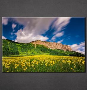 Slika na platnu Žuto cveće Nina3075_P