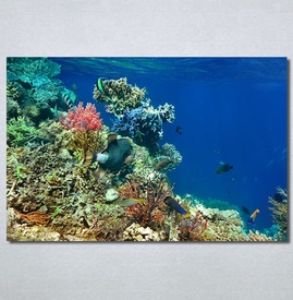 Slike na platnu Akvarijum Nina30267_P
