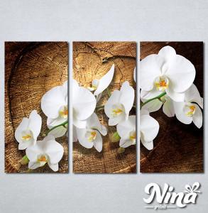 Slike na platnu Bele orhideje Nina323_3
