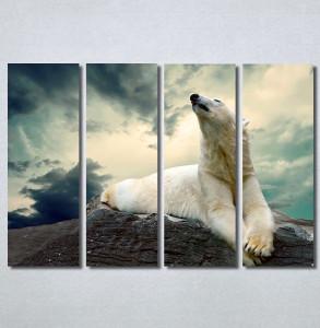 Slike na platnu Beli medved Nina30300_4