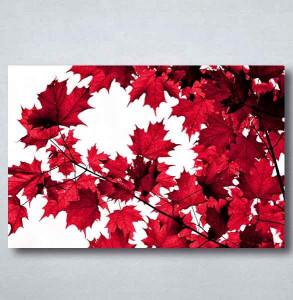 Slike na platnu Crveno lišće Nina091_P