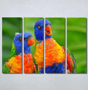 Slike na platnu Dva papagaja Nina30313_4