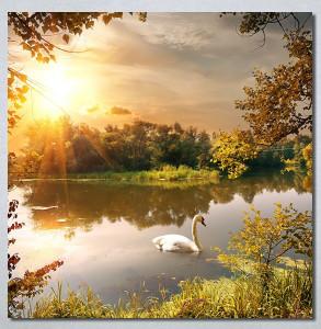 Slike na platnu Labud na jezeru Nina30286