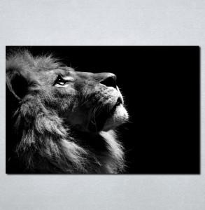 Slike na platnu Lav crno bela slika Nina069_P