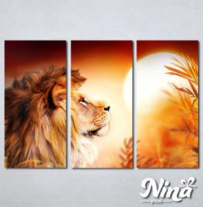 Slike na platnu Lav kralj životinjaNina308_3