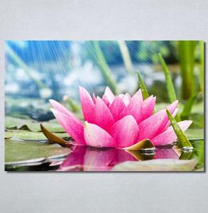 Slike na platnu Lokvanj Nina30373_P