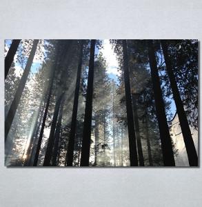 Slike na platnu Mračna šuma Nina30195_P