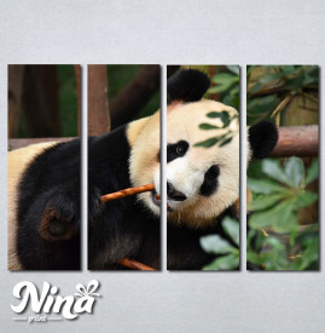 Slike na platnu Panda Nina268_4