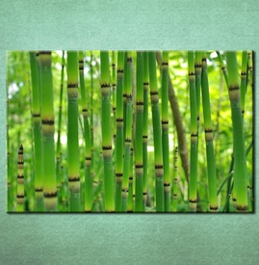 Slike na platnu Bambus Nina3093_P