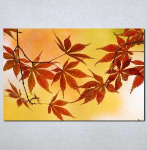 Slike na platnu Jesenji list Nina005_P