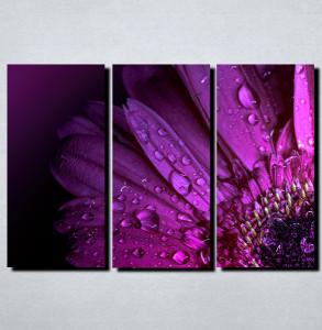 Slike na platnu Kapi rose i cvet Nina122_3