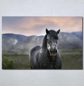 Slike na platnu Konj na poljani Nina30205_P