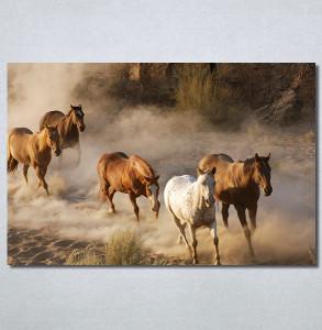 Slike na platnu Konji 2 Nina30337_P