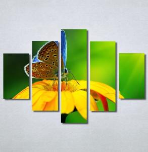 Slike na platnu Leptir Nina30237_5