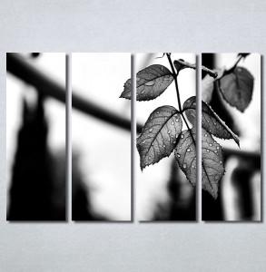 Slike na platnu List Nina30363_4