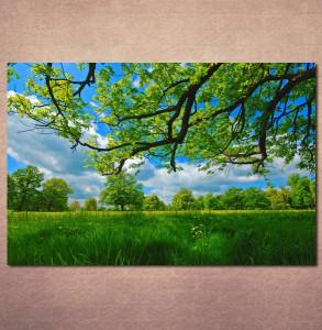 Slike na platnu Livada i krošnja drveta Nina30119_P