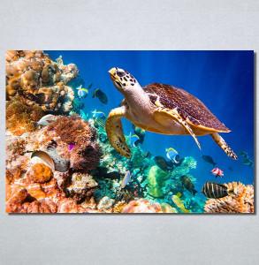 Slike na platnu Morski svet Nina30215_P