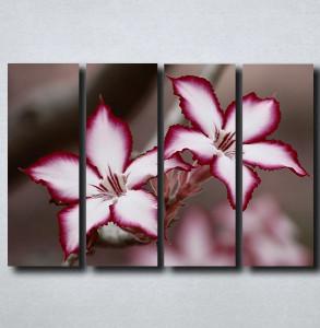 Slike na platnu Neobican cvet Nina175_4