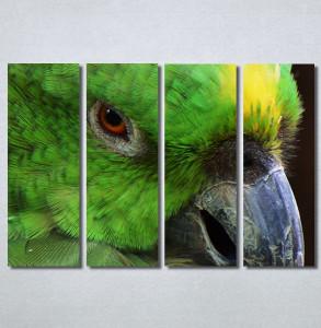 Slike na platnu Papagaj zeleni Nina30349_4